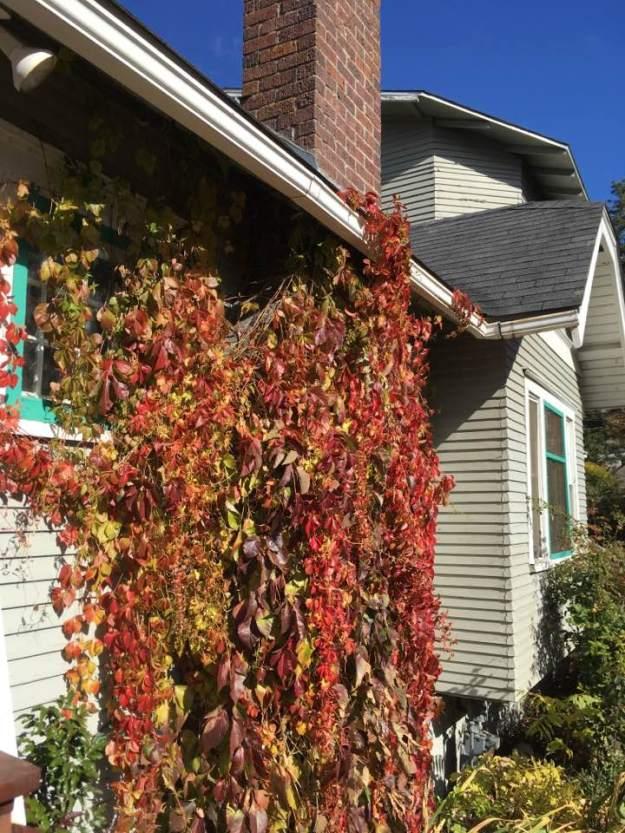 秋天的紅葉